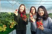"""""""겨울한파 이겨낸 딸기 수확 체험하세요""""18일부터 접수"""