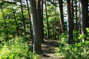6월의 국유림 명품숲 '울진 금강소나무숲' 선정